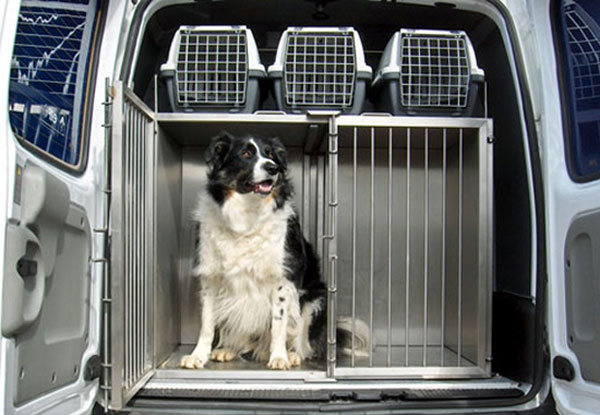 Vantage Vehicle Conversions Has A Division Dogtran That Specialises In For Animal Transit
