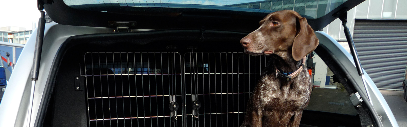 Dogtran, the division of Vantage Vehicle Conversions that specialises in the conversion of vans and pickups for the safe and comfortable transit of animals.